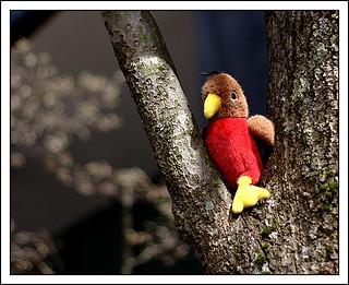 Lost Birdie   by Iguanasan