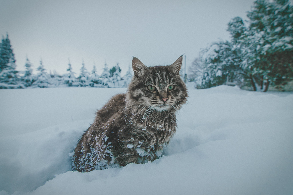 My cute kitten on snow