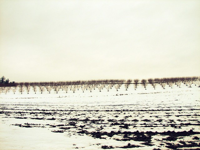 142 ~ winter orchard