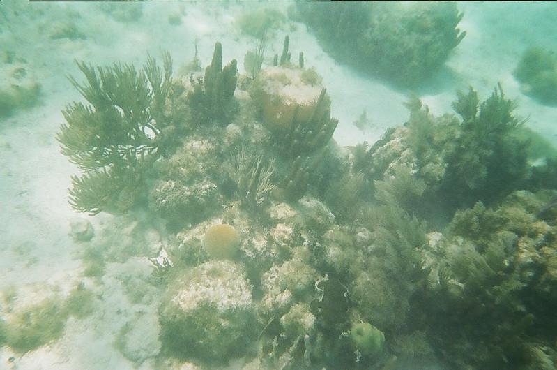 Costa Maya - Snorkeling