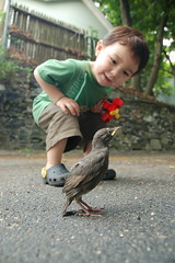 Baby bird in the driveway by Chris Devers
