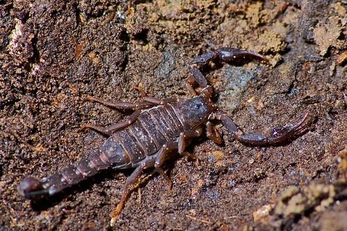 rain arachnid hike scorpion sigma70300mmf456apomacrosuperii