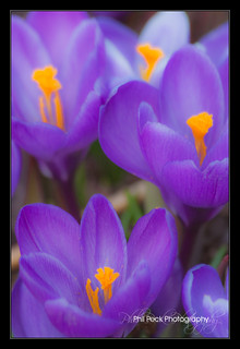 Soft Focus of Spring