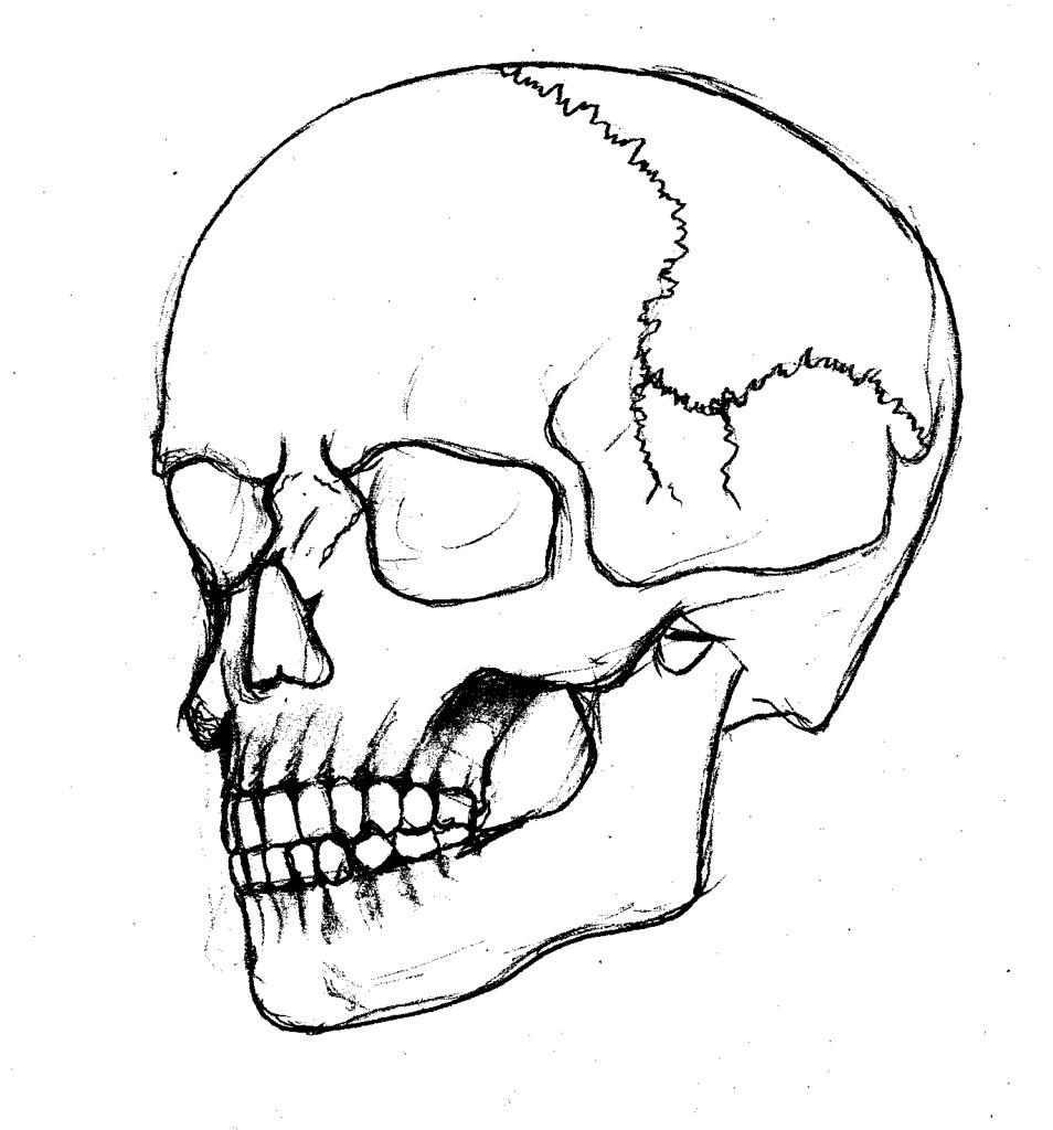 картинки черепа со всех сторон идеально подойдут