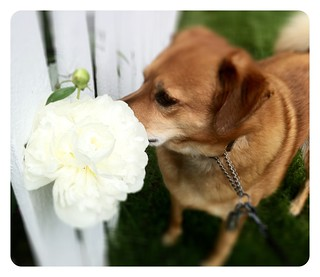 Stopping to smell the flowers | by tehgipster
