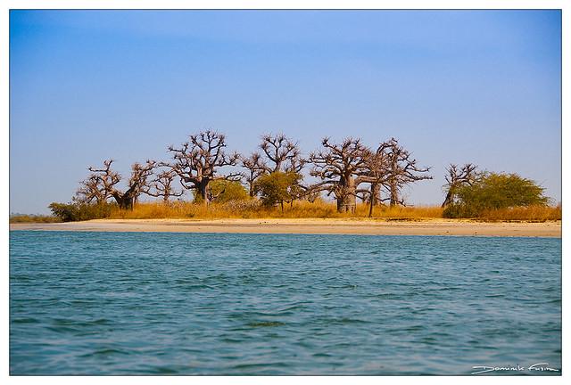 Baobab and sea