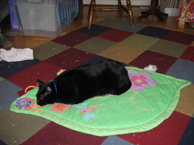 Taco, Sleeping on the Baby's Activity Pad