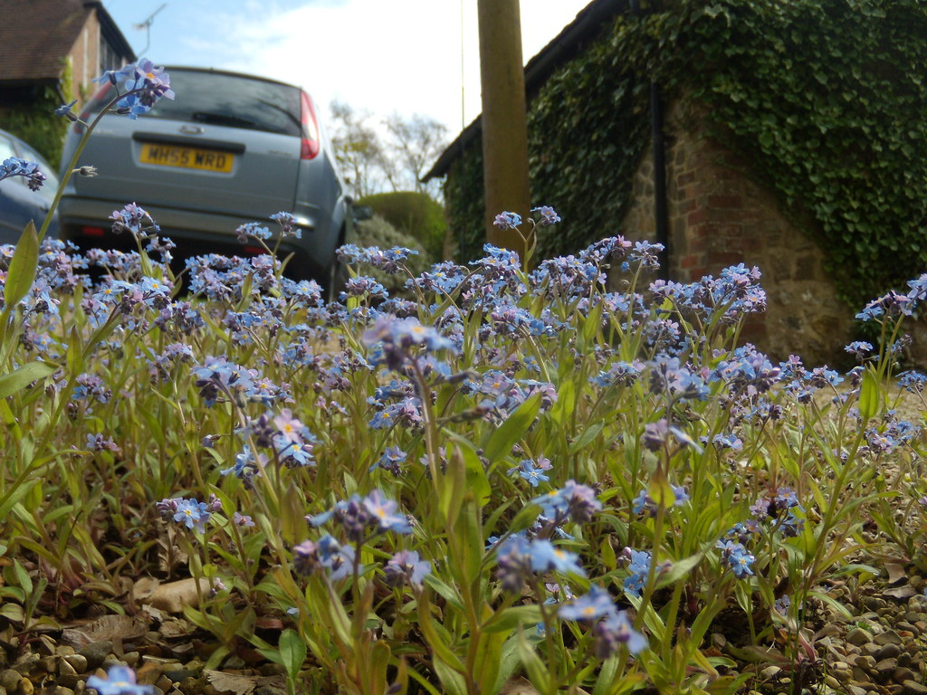 Forget-me-not Billingshurst to Amberley