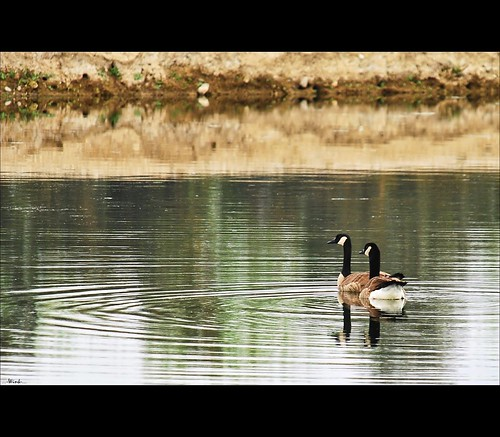 reflection geese pond goose explore 23 fp sigma18200 nikond80