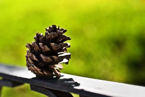 Piña seca // Pine cone
