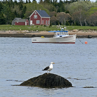 Gull, Boat and Red House