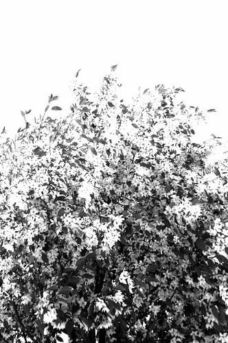 High Key Trees