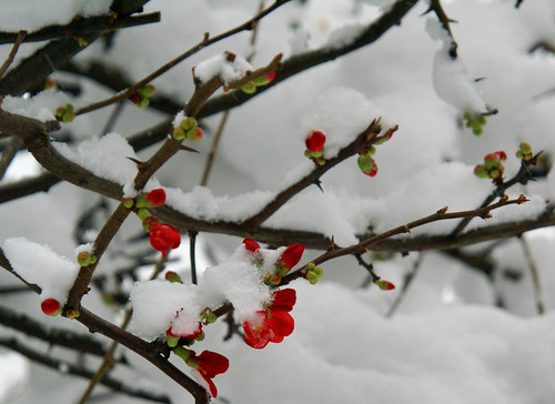 Deptford in the snow: flowers | by CarolineLD