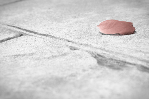 Petal On The Driveway | by chazlever