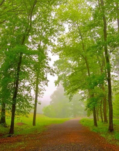 statepark park trees mist green nature field misty fog forest virginia spring foggy vivid tokina1224 manassas foggymorning d300 manassasbattlefield blueribbonwinner virginiastatepark mywinners abigfave yourwonderland