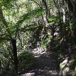 Viajefilos en Australia. Blue Mountains 016