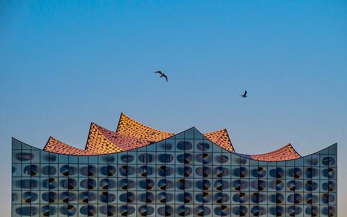 architecture architektur bird building concerthall elbphilharmonie elphi gebäude seagull hafencity hamburg herzogdemeuron himmel mzuiko40150mm modern möve olympusem5 sky sunrise vogel