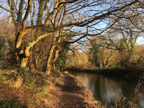 The canal in the afternoon, winter Hook to Winchfield walk