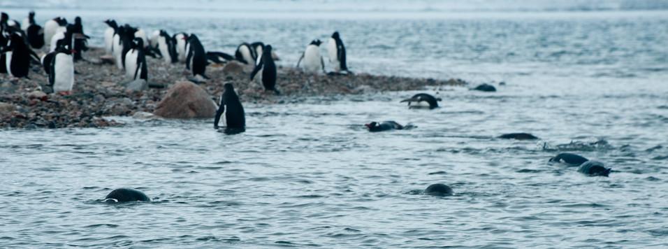 Antarctic Baths