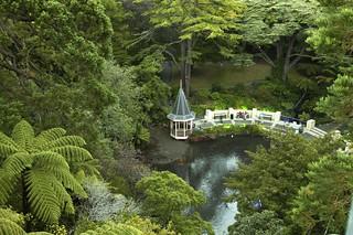 Duck Pond at Wellington Botanic Garden