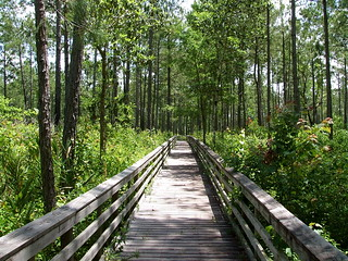 Boardwalk near Fish River | by alwright1