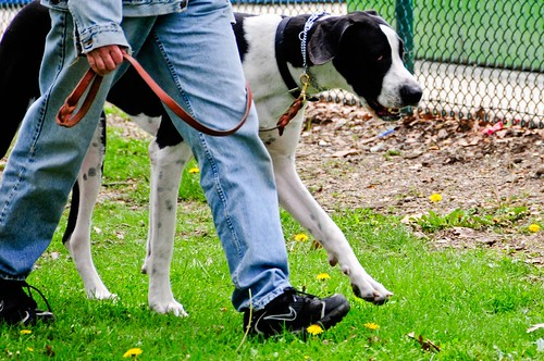 Big dog walking | by Valerie Everett