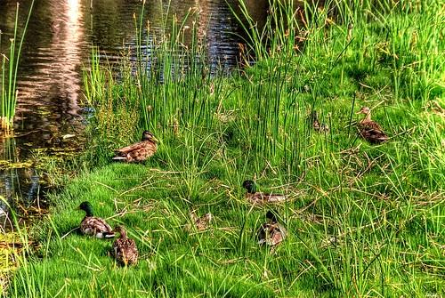 california water grass reeds ducks explore fp wetland oxnard sigma18200 nikond80 walterbmorandapark
