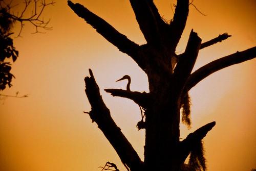 sunset tree crane mobilebay sooc sortayellow orisitjustorange