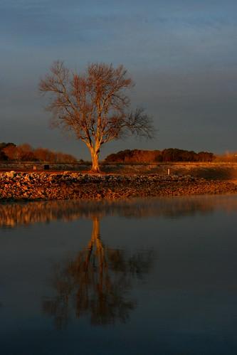 lake tree chattanooga sunrise tennessee chickamaugalake
