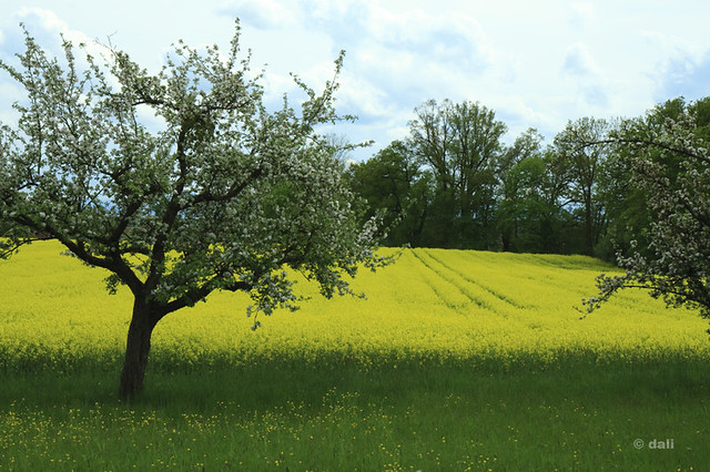 spring fields 2010