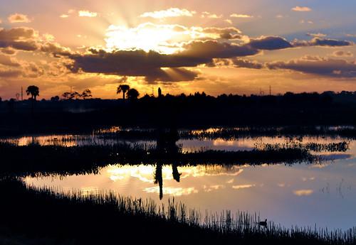 light clouds sunrise landscape dawn wetlands coot viera