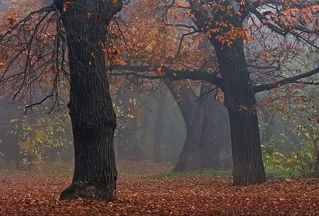 Volt egyszer egy ősz...../  There was an autumn once...