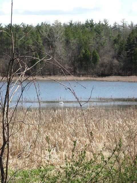 MacDonald Woods Forest Preserve