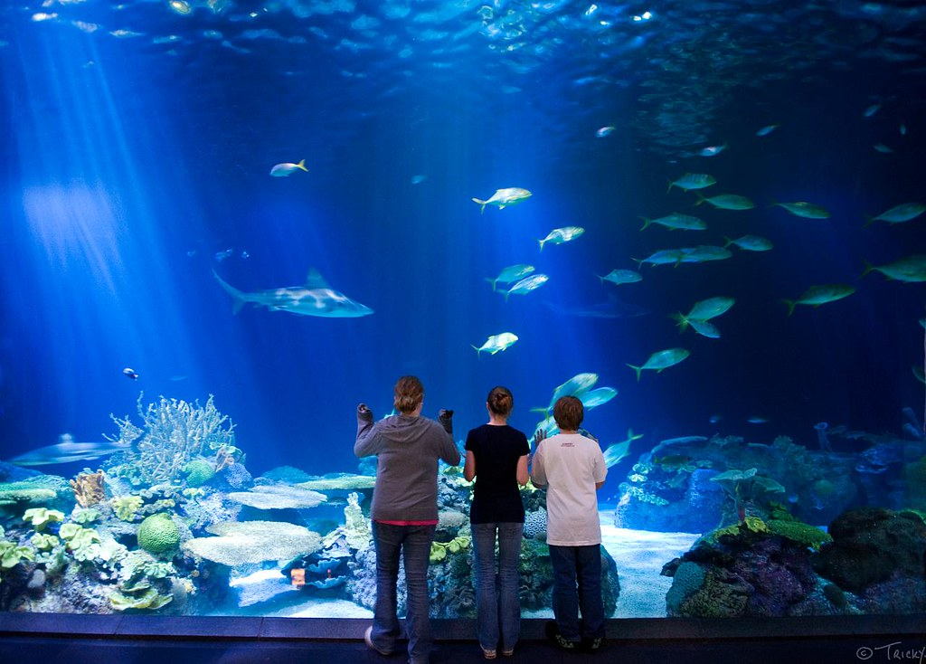 Shedd Aquarium, Chicago | Shedd Aquarium on the edge of ...