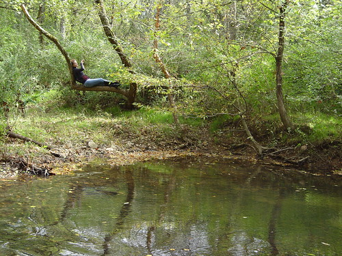 trees woman reflection green water creek branch sitting alabama bank hazel trunk