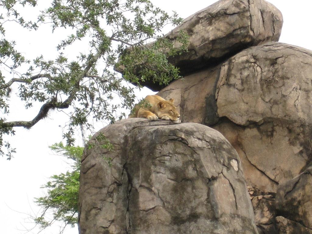 DisneyWorld Day 4 - Animal Kingdom
