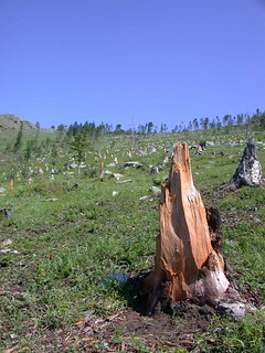 Bogd Khan Uul Strictly Protected Area - Mongolia   by East Asia & Pacific on the rise - Blog