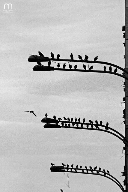 Pássaros no Rio de Janeiro