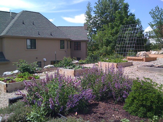 Herb garden and cucumber trellis