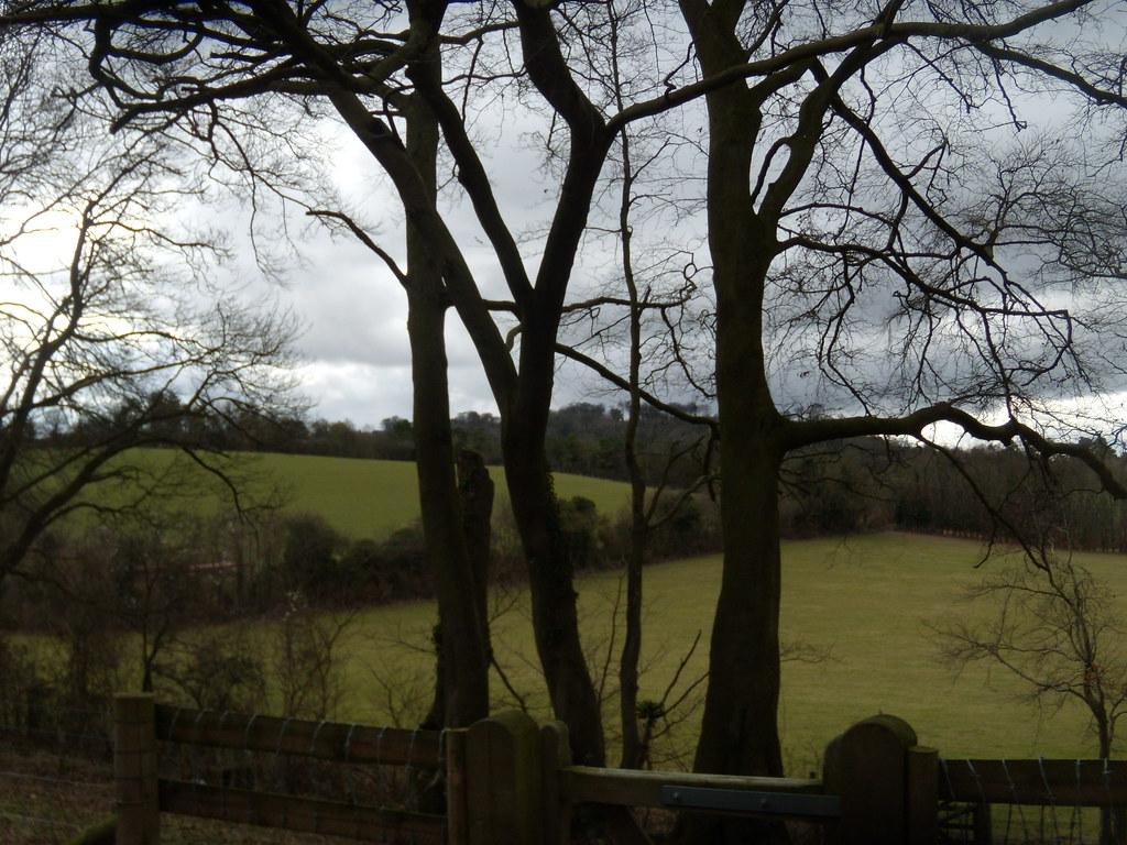 Trees, view Little Kimble to Saunderton
