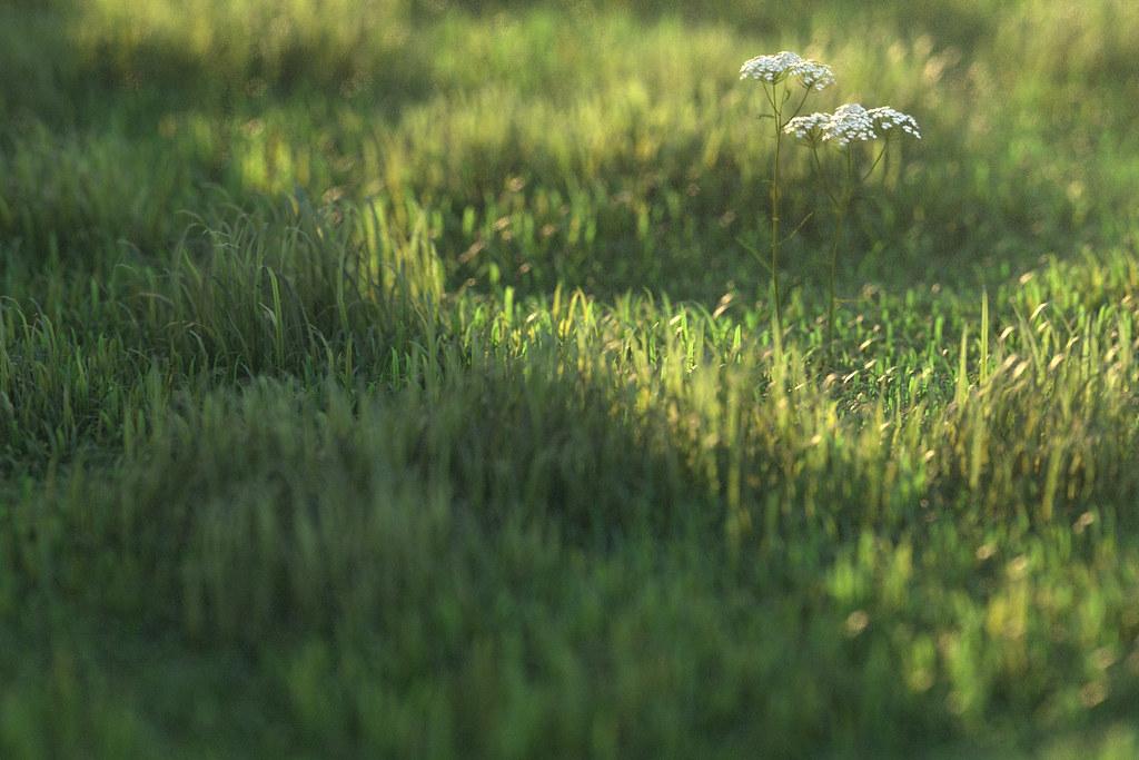 cam02_longgrass0000 by Peter Guthrie