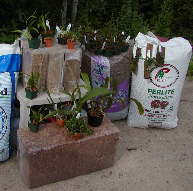 ready for some repotting...