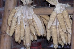 Fri, 10/01/2003 - 07:03 - Local Wax Maize in Long'an