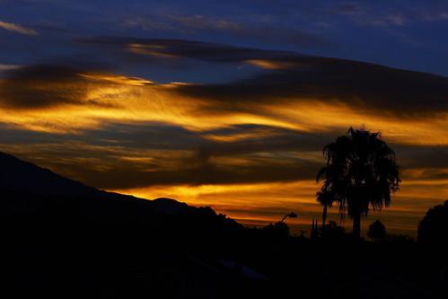 sun tree silhouette san palm rise dimas sandimascalifornia