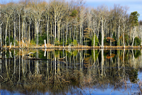 wetland chesapeake bay winterfoliage trees water landscape north point state park baltimore county maryland