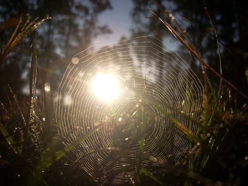 nature clouds sunrise photography spider florida web spiderweb dew fl