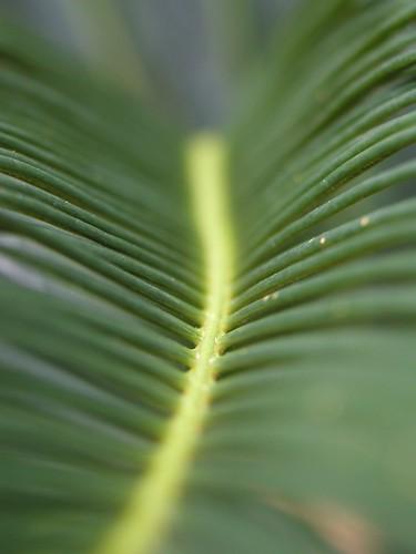 plants macro gardens bermuda fronds