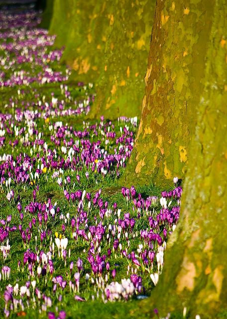 Spring, spring, spring, spring :D