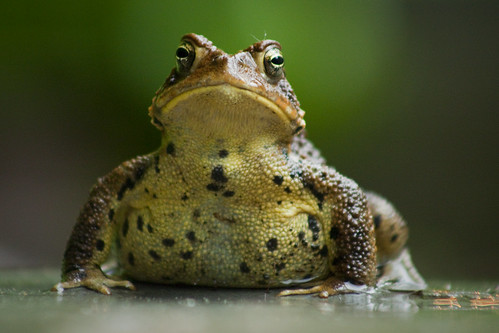 toad | by delgrosso