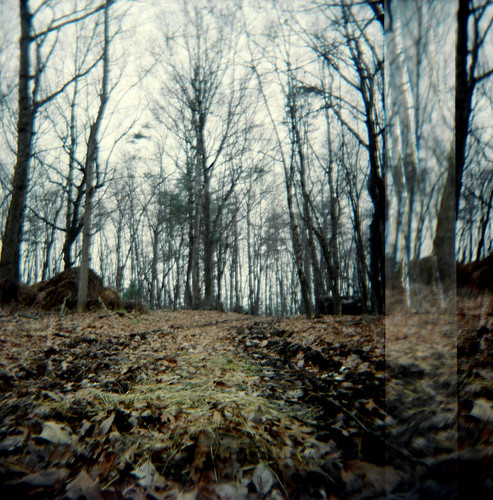 trees 120 6x6 film leaves fog mediumformat square outdoors holga lomo lomography woods mud toycamera tracks silhouettes eerie trail cfn